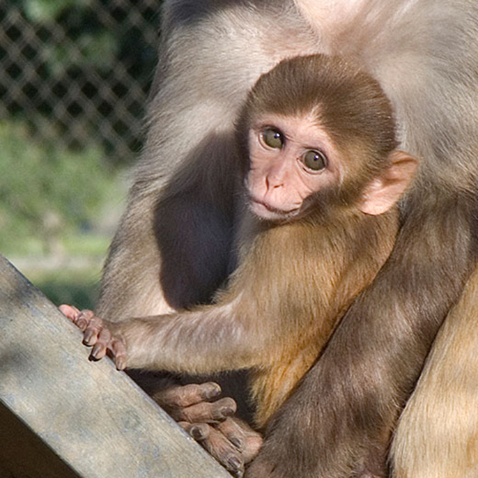 The study revealed the first comprehensive macaque milk proteome and newly identified 524 human milk proteins.