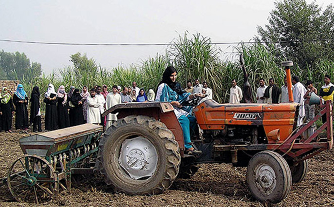 Agriculture, including vegetables, grain and fruit crops, is the largest sector of Pakistan's economy.