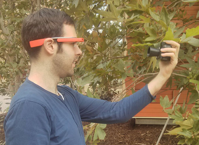The Google Glass app and illuminator allow researchers unit to analyze chlorophyll concentration in a leaf without harming the plant.