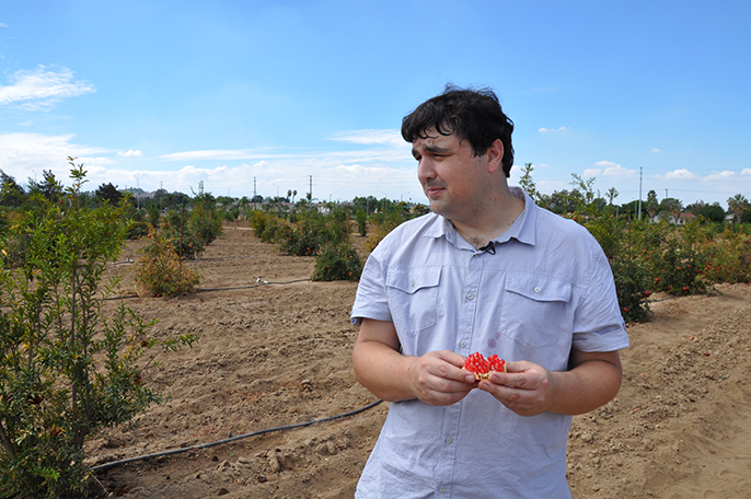John Chater, a UC Riverside graduate student and UC Global Food Initiative fellow, stands in a field of pomegranate trees he is studying.