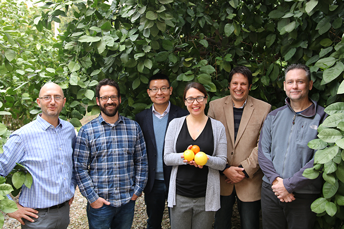 UC Riverside researchers, from left, Philippe Rolshausen, David Jassby, Haizhou Liu, Caroline Roper, Georgios Vidalakis, and James Borneman received a $5.1 million grant to fight a disease killing citrus trees.