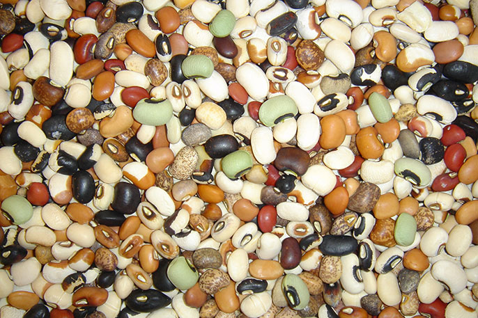 Genetic diversity of cowpea seed