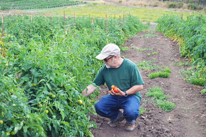 UC Santa Cruz alumnus and current CASFS researcher Mark Lipson was honored for his years of service to the organic and sustainable agriculture movement.