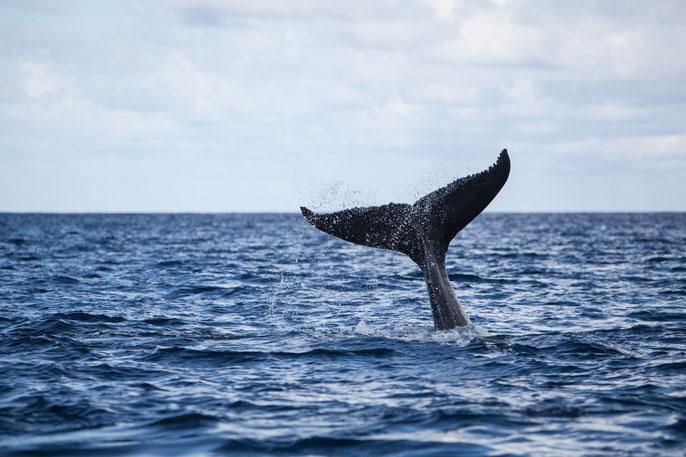 UC Merced whale