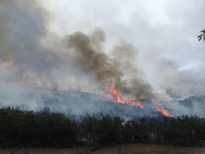 Wildfire UC