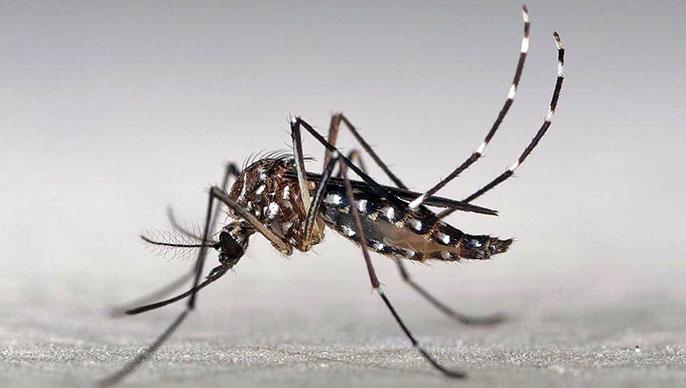UC San Diego Zika